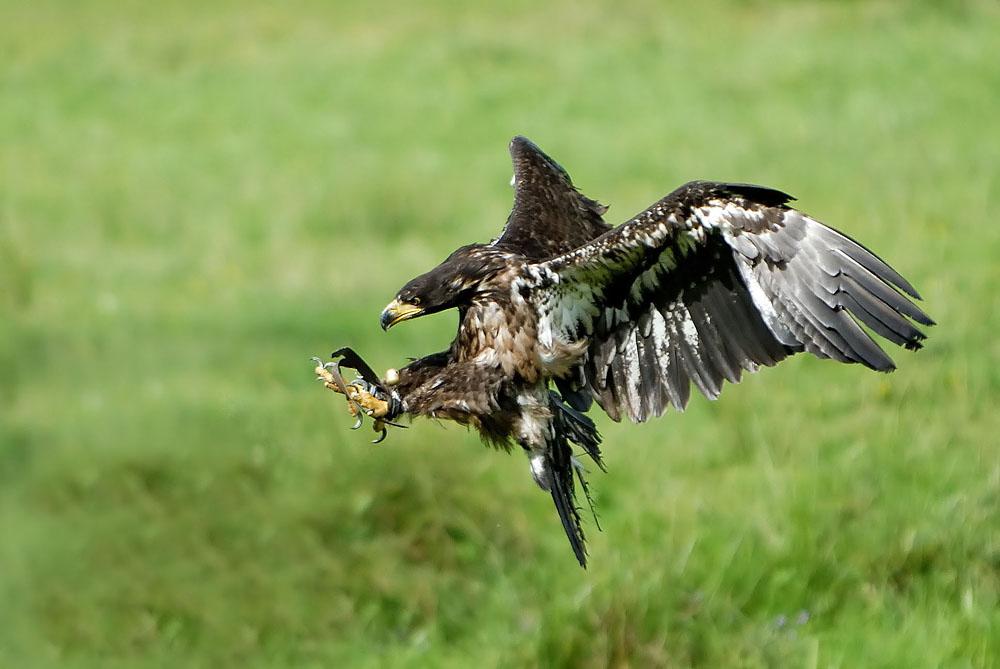 Der Adler Ist Gelandet Zitat