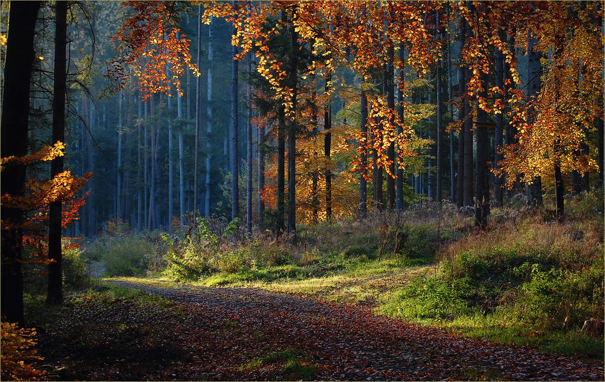 herbstwald  forum f u00fcr naturfotografen