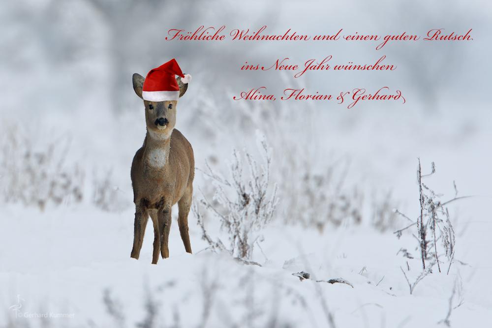 Fröhliche Weihnachten * (Forum für Naturfotografen)