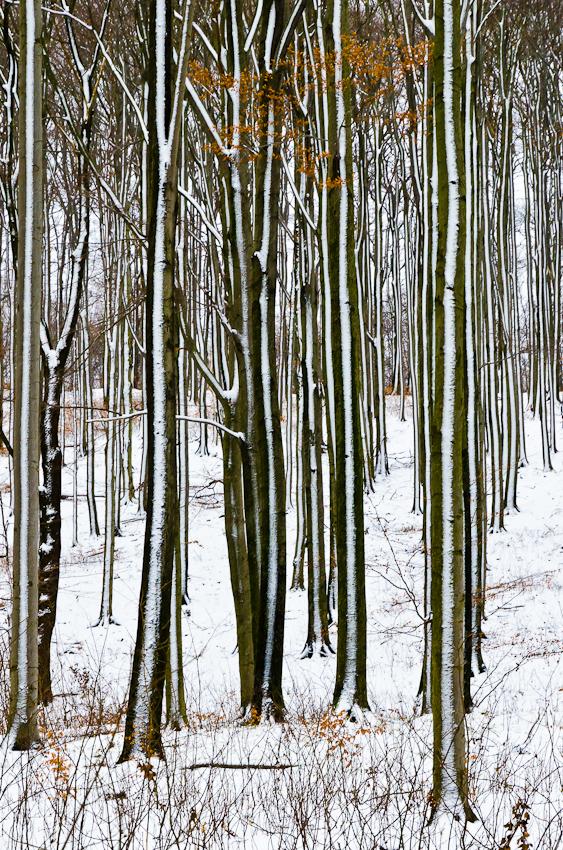 Wald im jugendstil forum f r naturfotografen - Farben im jugendstil ...