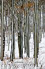 Wald im Jugendstil