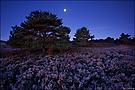Heide bei Nacht