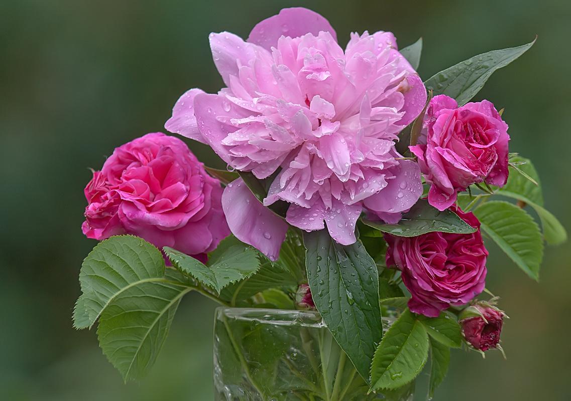 eine rose ist eine rose ist eine rose hie es im vorigen jahrhundert forum f r. Black Bedroom Furniture Sets. Home Design Ideas