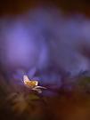 Blaues Frühlingsfeuer