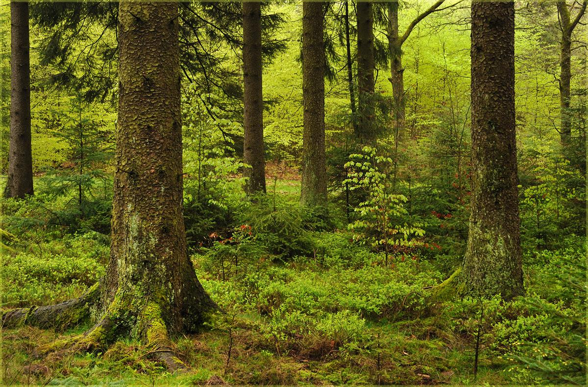 Flittchen mit Rehaugen im Wald durch gepoppt