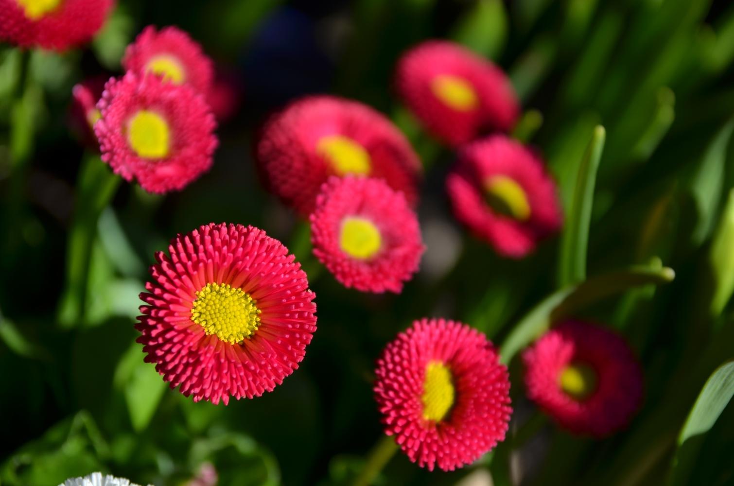 Blumen im märz  Blumen aus dem Garten... (Forum für Naturfotografen)