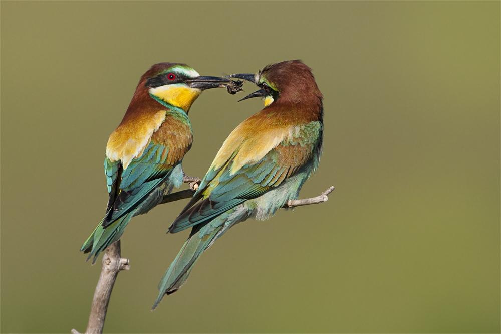 Kleine Geschenke Erhalten Die Freundschaft Forum Fur Naturfotografen