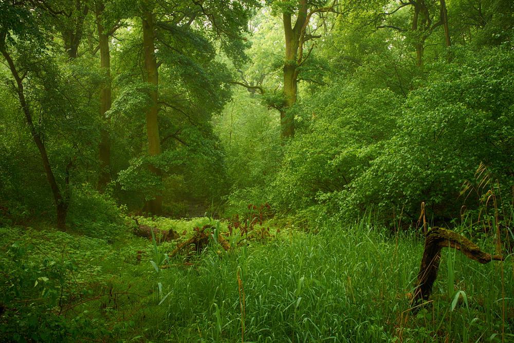 Urwald Rumänien