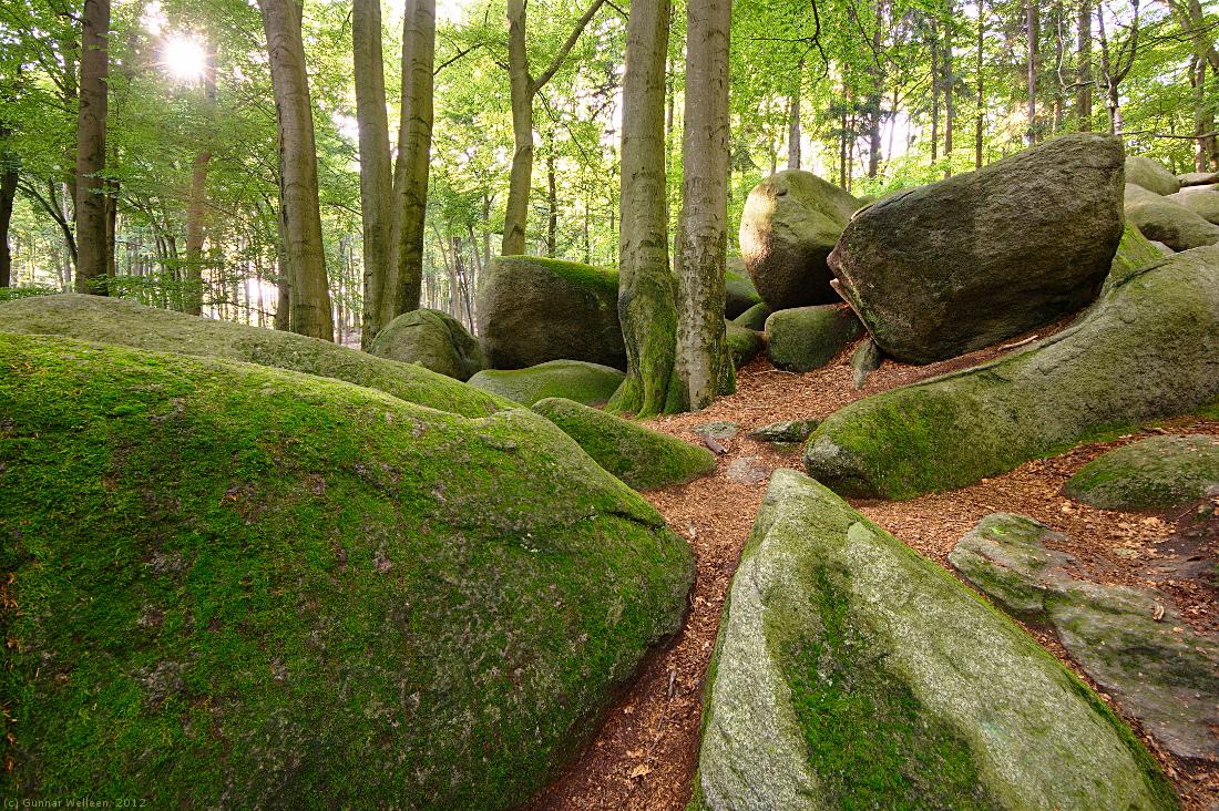 Im Wald der großen Steine (Forum für Naturfotografen)