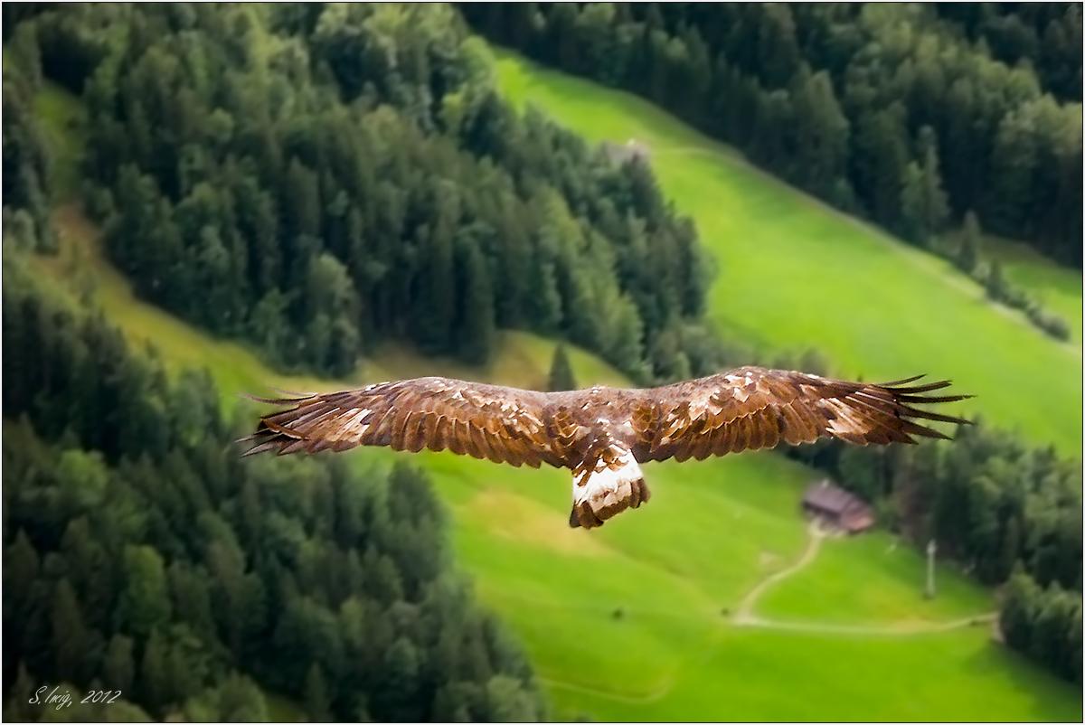Αποτέλεσμα εικόνας για eagle fly free