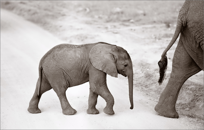 kleiner elefant  analog  forum f u00fcr naturfotografen