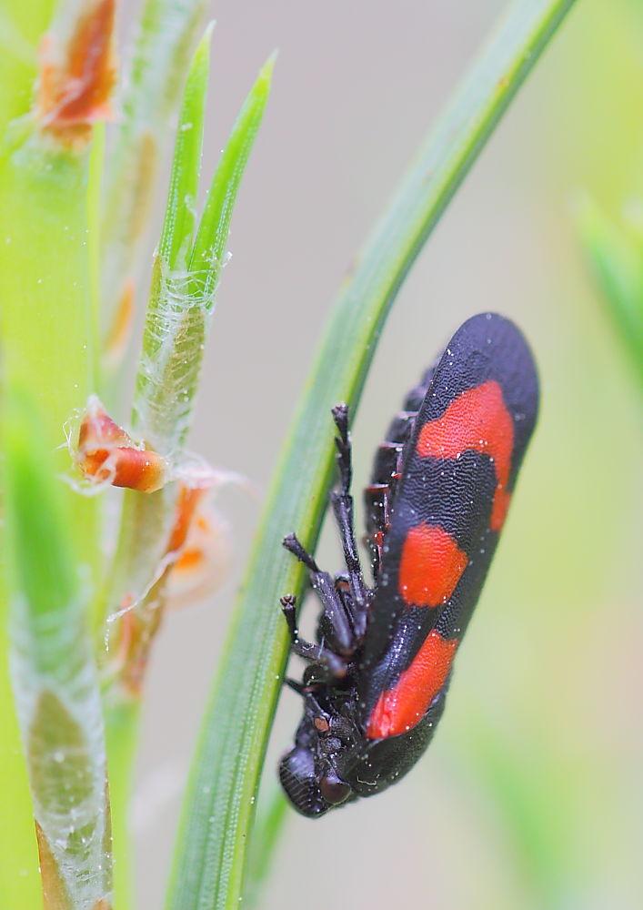 Schwarz Rot Grün
