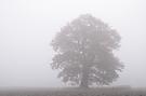 Mein Baum- Vergleich