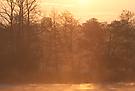 Morgenstimmung am Köppchensee...