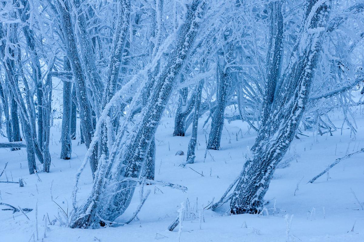 image::Klaus_Bombach_winter_raureif_erzg