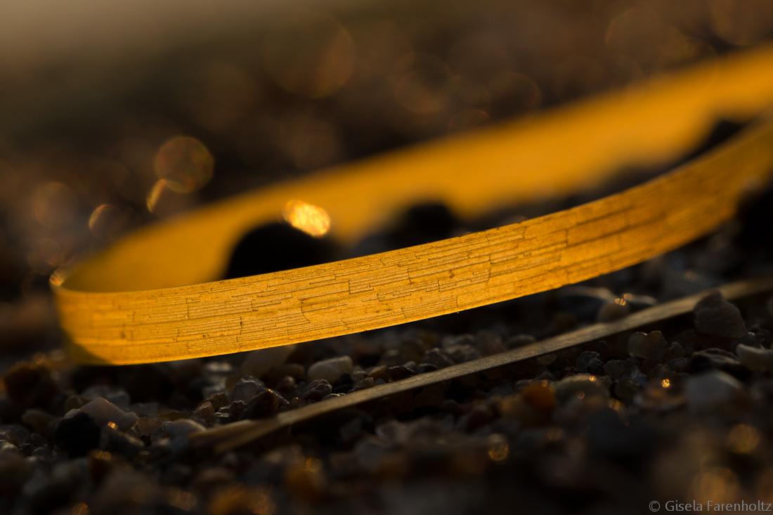 Das Goldene Band