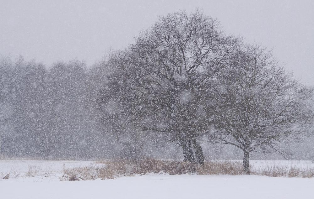 Der letzte Schneefall (Forum für Naturfotografen)