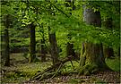 Waldstillleben