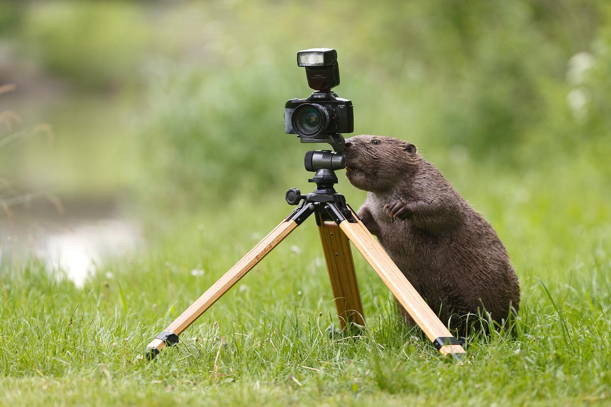 Der Fotograf Forum Für Naturfotografen