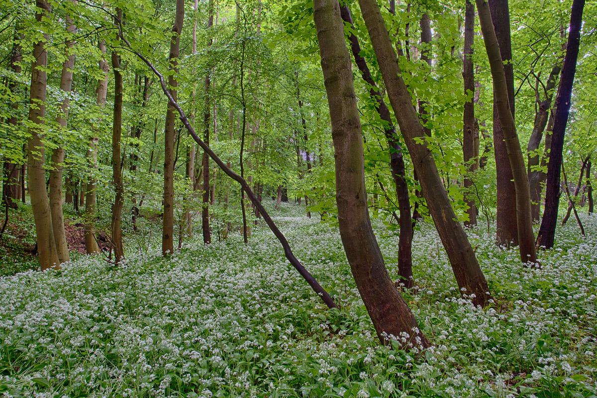 Multikulti-Gruppensex Im Wald