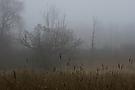 Kopfweide mit Nebelstimmung
