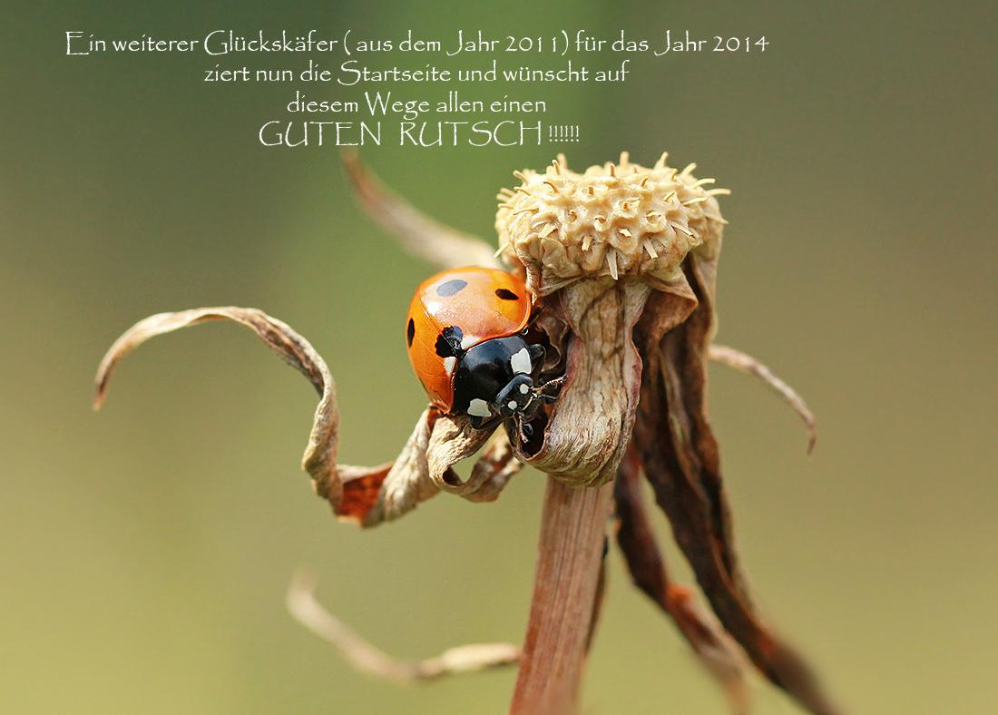 Glück kann man nicht genug haben...... (Forum für Naturfotografen)
