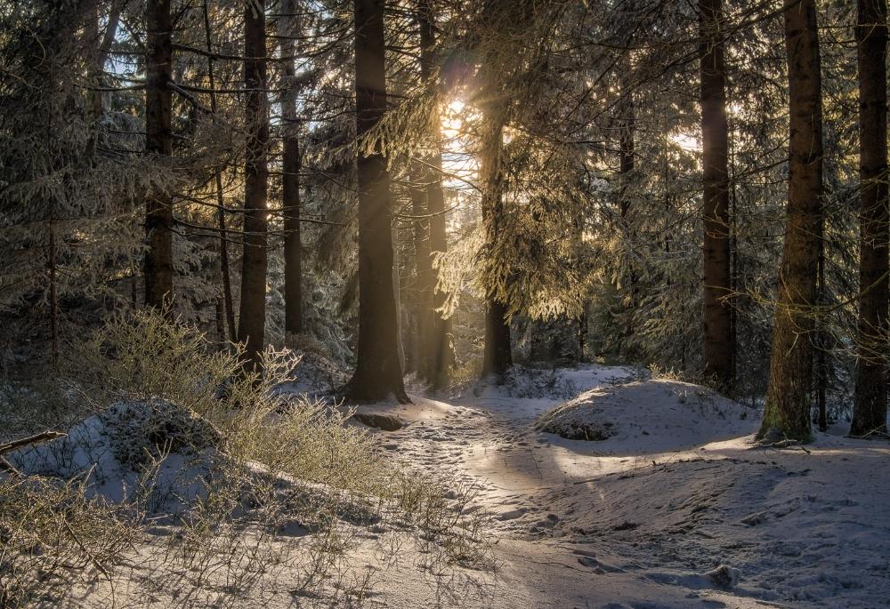 Winterwald (Forum für Naturfotografen)