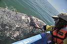 Wal und Mensch…