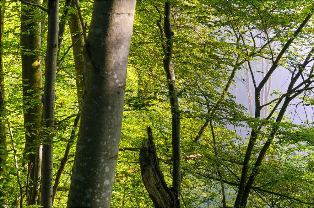wieder weg (Forum für Naturfotografen)