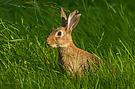 """""""nur"""" ein Kaninchen"""
