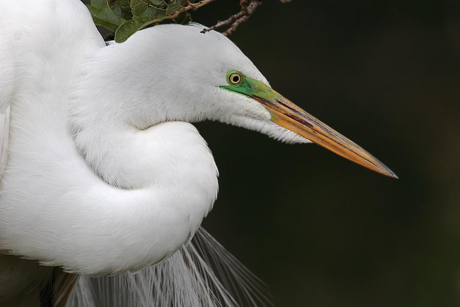 Vogel Mit O