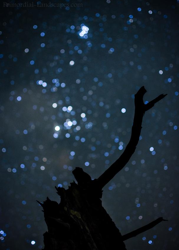 Greif Nach Den Sternen