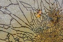 Pollenstaub...