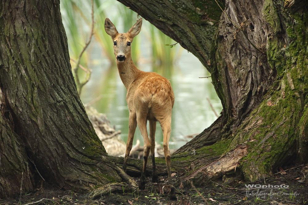 natürlicher Bilderrahmen (Forum für Naturfotografen)