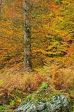 Herbstpracht