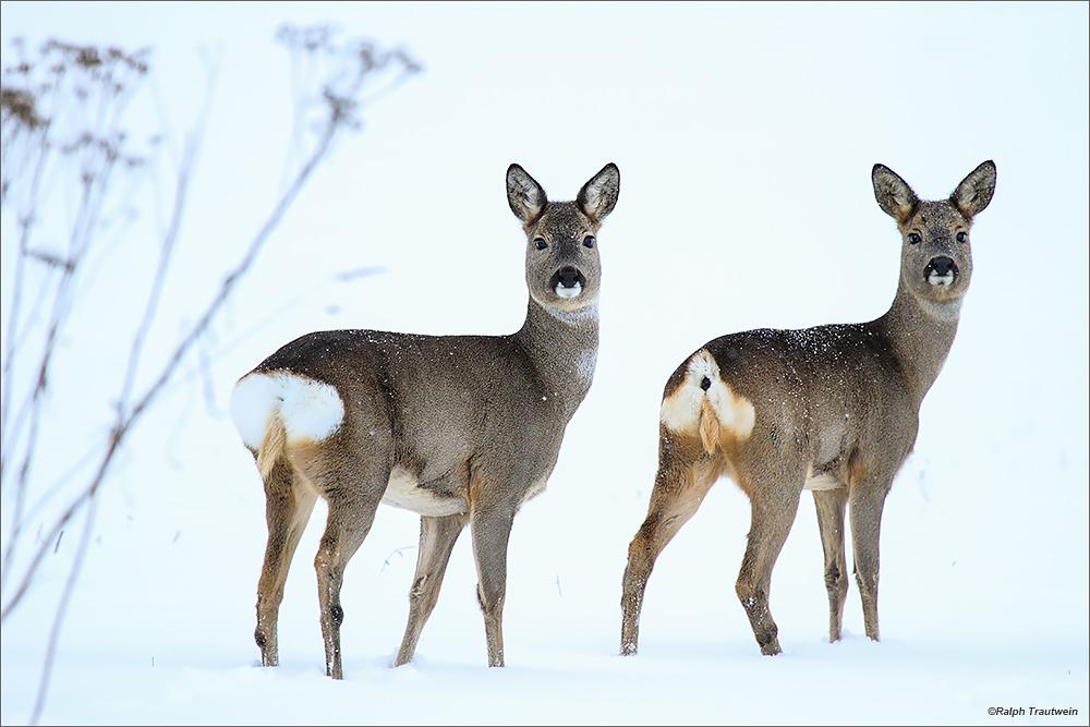 Winter Forum F 252 R Naturfotografen