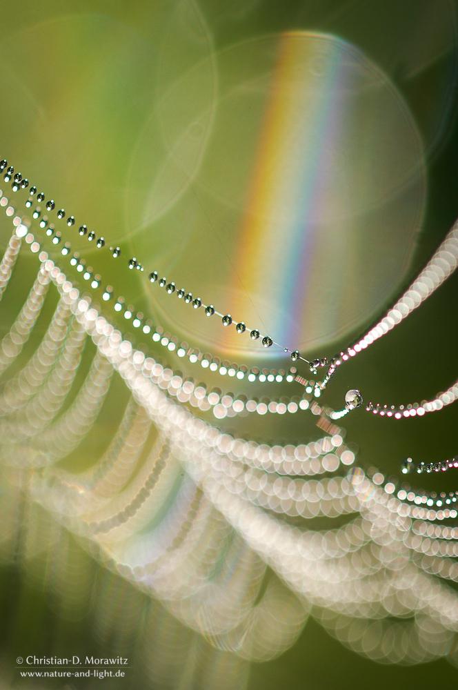Arbeitsblatt Licht Und Farben : Licht und farben forum für naturfotografen