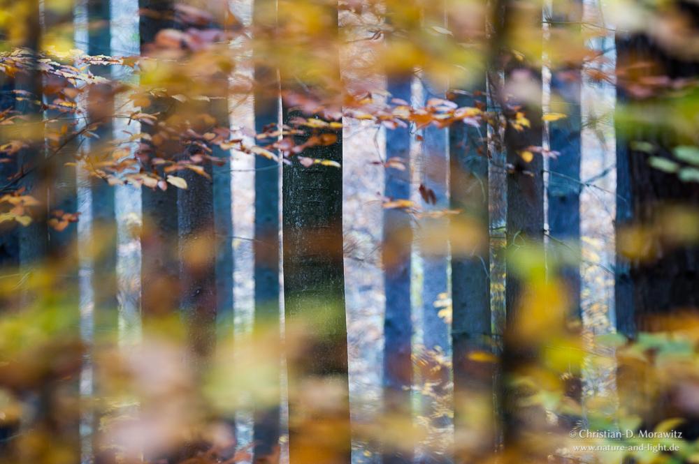 Herbst forum f r naturfotografen for Christian herbst