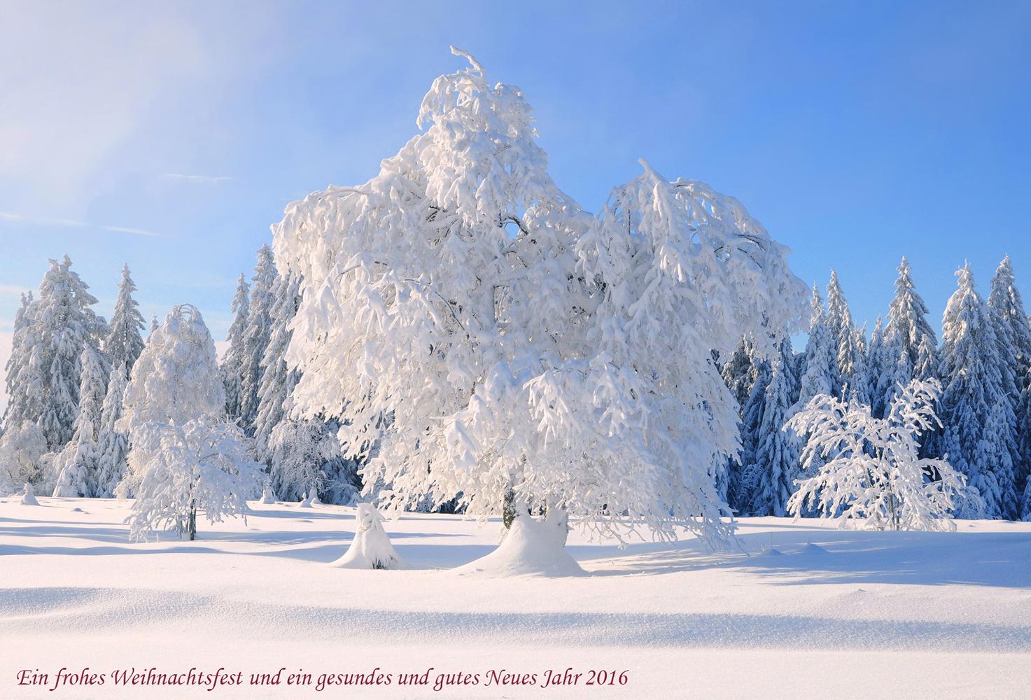 winter im schwarzwald forum für naturfotografen