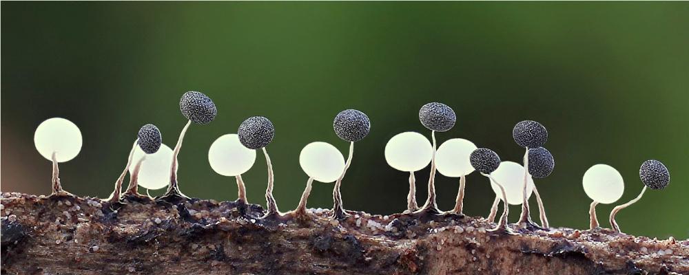 Kleine gruppe physarum forum f r naturfotografen for Kleine esstisch gruppe