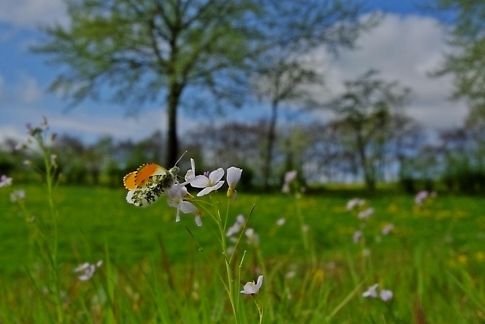 Warten Auf Den Frühling : warten auf den fr hling forum f r naturfotografen ~ Watch28wear.com Haus und Dekorationen