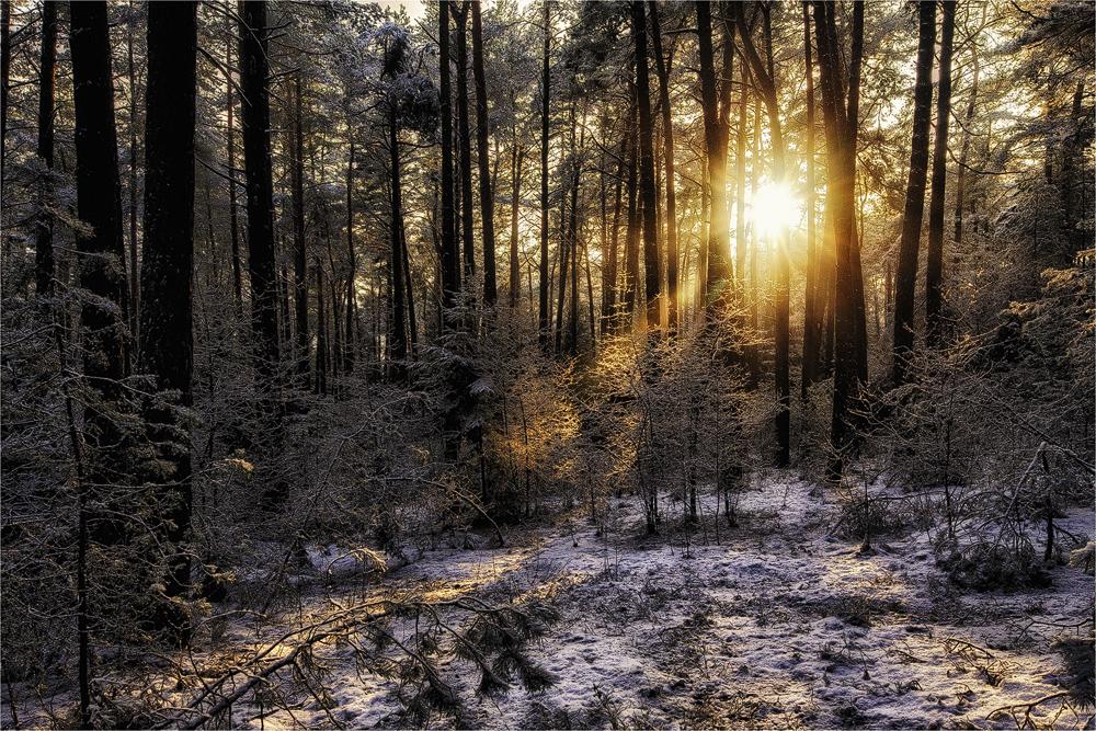 Warten Auf Den Frühling (Forum Für Naturfotografen