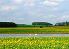 Mecklenburgische Raps(kultur) - Landschaft