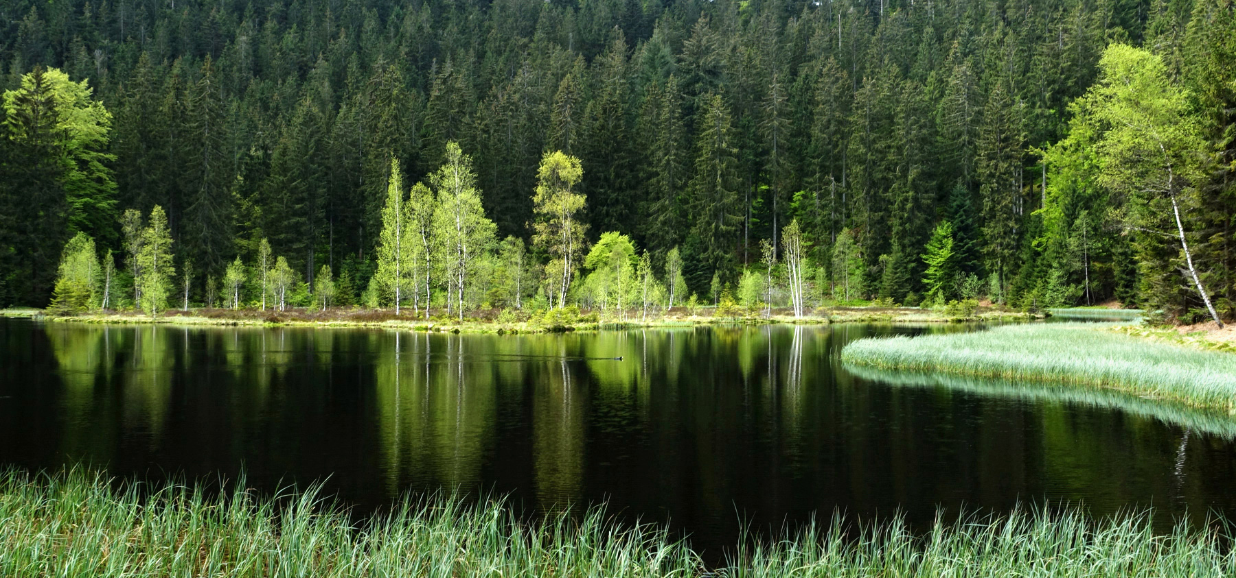 Flüchtiger Im Schwarzwald