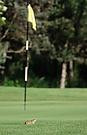 Ziesel am Golfplatz