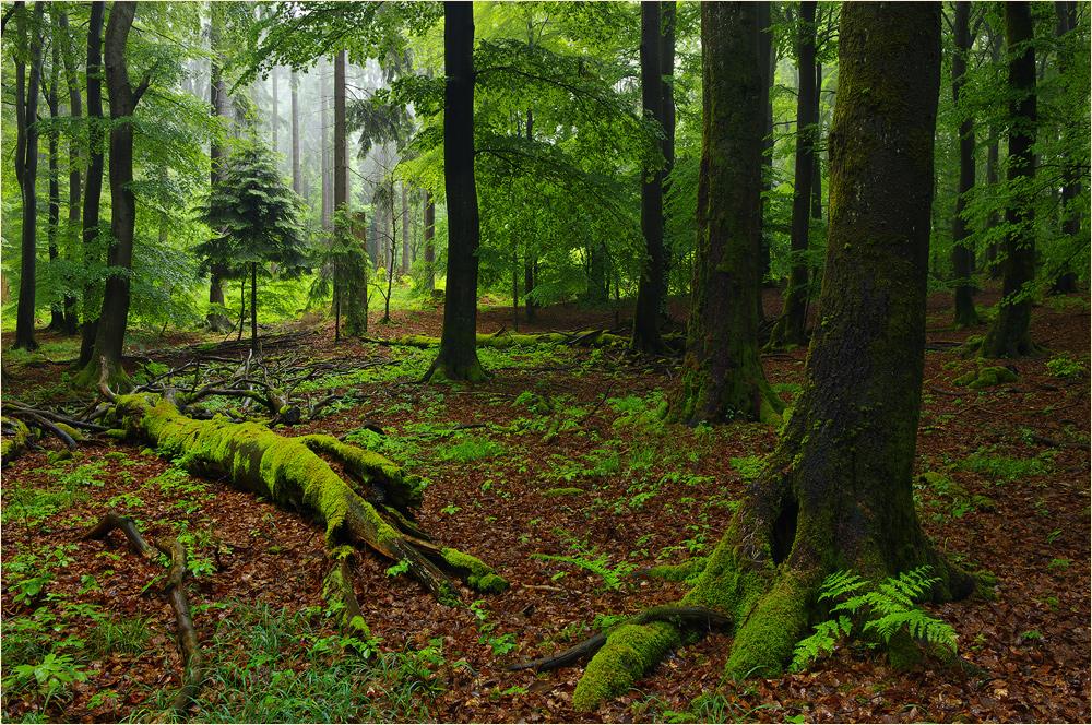 Im Wald Vermöbelt