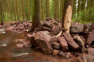 https://naturfotografen-forum.de/data/o/257/1289365/Stonewashed_2_s.jpg