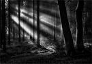 Licht im dunklen Wald ...