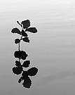 Der Wasserbaum ...