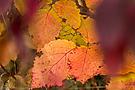 Herbstfeuerwerk...